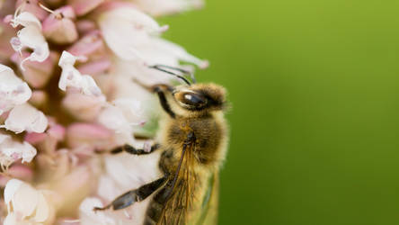 Bee by jant-photo