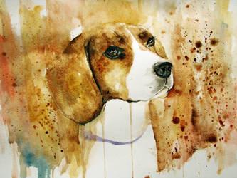 Beagle by agnia-solja
