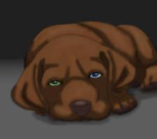 Chesapeake Bay Retriever puppy by BookThief17