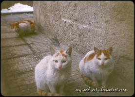 626 by evy-and-cats