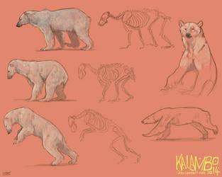 Polar bear study by kalambo