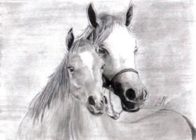 Horse by CarlooSolrac