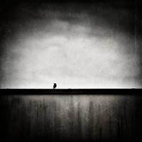 L'oiseau sur le mur by laurent2l