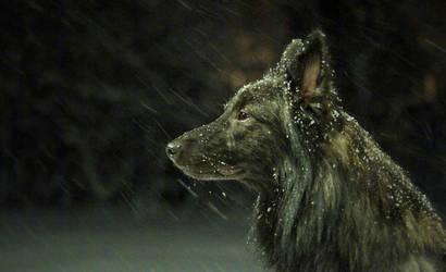 Winter by Janaita
