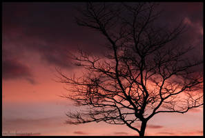 Tree and nice colors by Folksaga