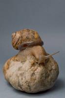 Escargot 5 by Jules171