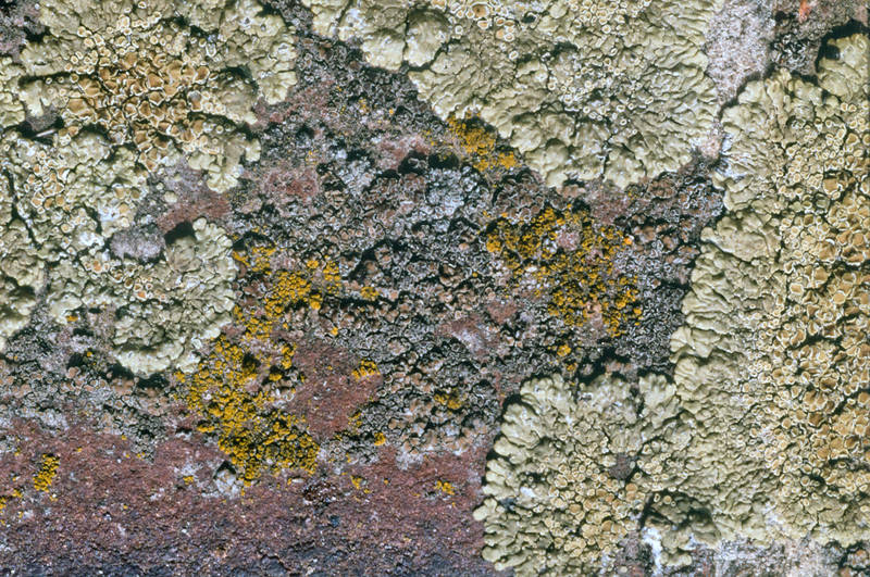 Texture (diapo) 1 by Jules171