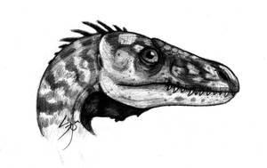 Eoraptor by SebasRuna