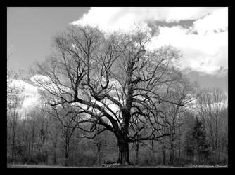 Tree of Wisdom by Kristamay