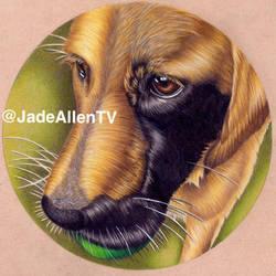 Enzo Labrador Realism Drawing by JadeAllenTV