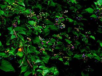 Possum grapes 29 by marshwood