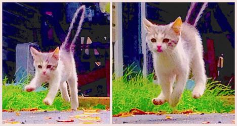 Power Kitten Rosie 2.1 by marshwood