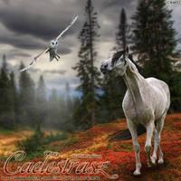 Caelestrasz by frisbee-horseland