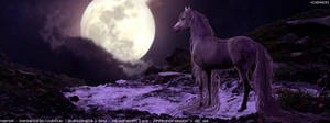 Moonlight Meadows Banner by frisbee-horseland