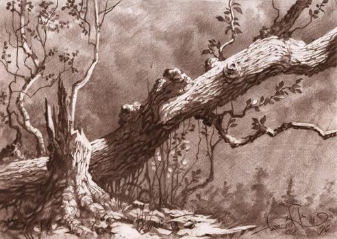 Pencil sketch by fear-sAs