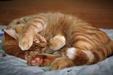 Khoram - Sleeping cutie by Ph0Xy