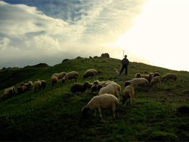 sheeper by kaveh67