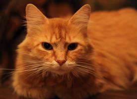 The Daft Cat by Innocentium