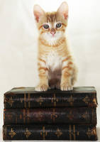 Bookworm Kip by Innocentium