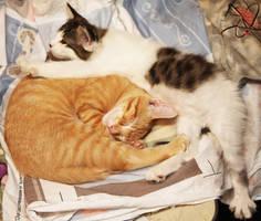 Napping Kitties by Innocentium