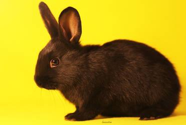 The Borrowed Bunny by Innocentium