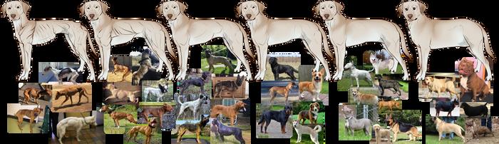 Dog Body Type Chart by CieloCadono