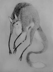 Fox by Draghessa
