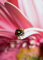 ::Ladybird:: by Doodoox