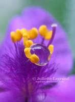 Pollen by Doodoox