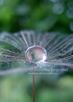 Fragile... by Doodoox