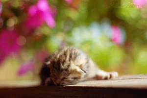 sleep kitty by MotyPest