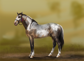 Donnador FRC (for sale) by Kartoffelpueh