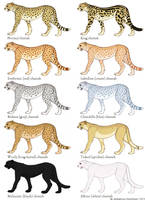 Cheetah Color Mutation Guide by ahillamon