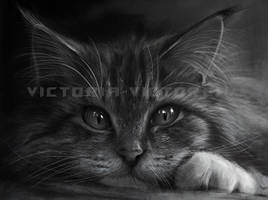 kitten by Victoria-victorem