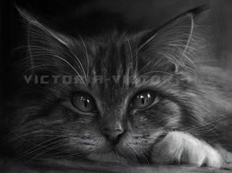 kitten by Victoria-victorem