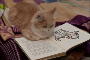A cat reads about my OC Rocky by AnimalLover670