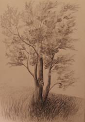 Tree on a Hill by TylersArtShack