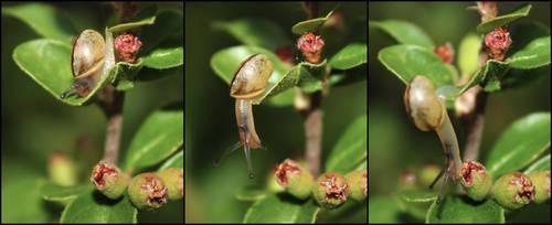 Little Snail by Acegikm0