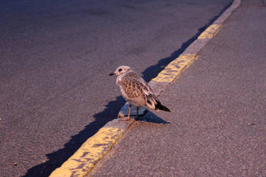 Little Seagull by Acegikm0