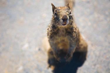 Squirrel. by wonderfish