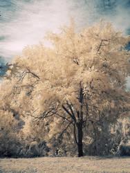 An Ordinary Tree by wonderfish