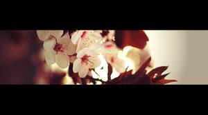 Blossom by FrantisekSpurny