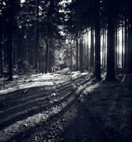 Path 2 by FrantisekSpurny
