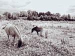 Wild Horses by FrantisekSpurny