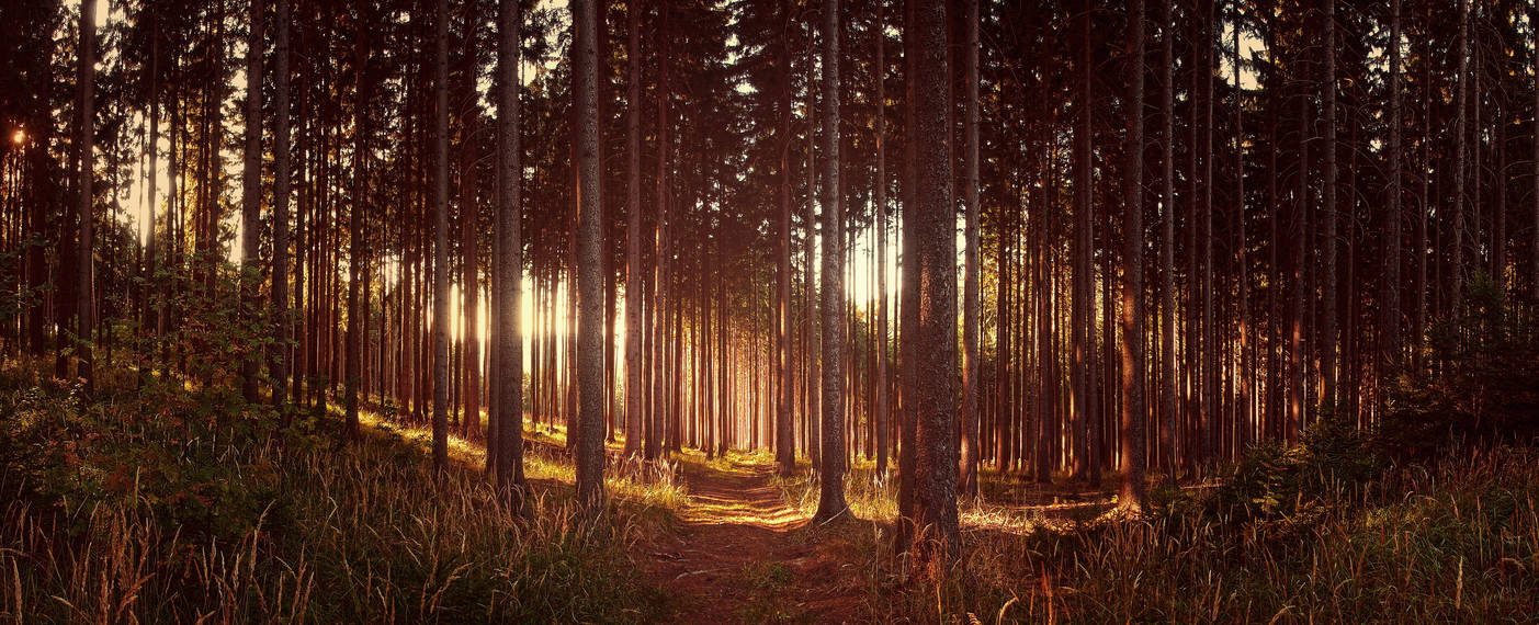 Forest stock by FrantisekSpurny