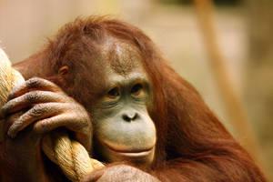 monkey pose by krystledawn