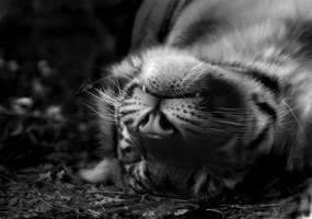 Cat Nap by krystledawn