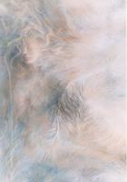 Softly Softly by AstridBruning