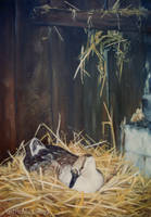 Nesting - OIL PAINTING by AstridBruning