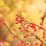 Autumn reveals by Sceleton